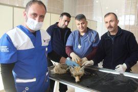 Köpeklerin kovaladığı yavru tilki kurtarıldı