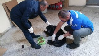 Hakkari'de kedi ve köpeklere kuduz aşısı yapıldı