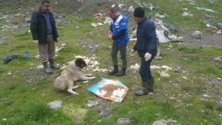 Hakkari'de sokak hayvanları için yemleme çalışması