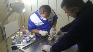 Hasta kediler tedavi altına alındı