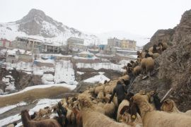 Yağışlardan tahrip olan ahırdaki 300 hayvan dışarıda kaldı