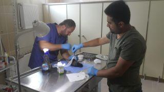 Veteriner ekibi yaralı karga için harekete geçti