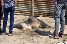 Yüksekova'da başıboş köpek dehşeti