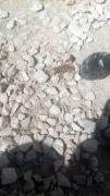 Yüksekova'da sarıkız örümceği görüldü