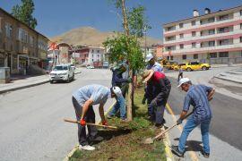 Hakkari Belediyesi kuruyan ağaçların yerine yenilerini dikti