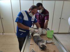 Hakkari'de aracın çarptığı anne kedi tedavi altına alındı