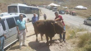 Hakkari'de kurbanlıklar sağlık taramasından geçirildi