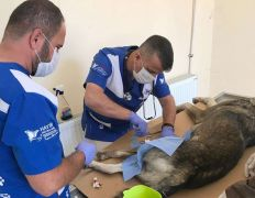 Hakkari veteriner ekipleri can kurtardı
