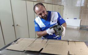 Veterinere getirilen kaplumbağa sağlam çıktı
