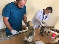 Yavru köpekler sağlık taramasından geçirildi