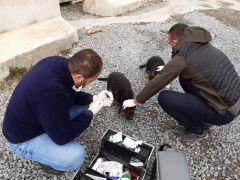 Hakkari belediyesinden köpek ve kedilere kuduz aşısı yapıldı