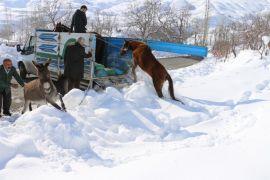 Hakkari'deki sahipsiz atlara vatandaşlar sahip çıktı