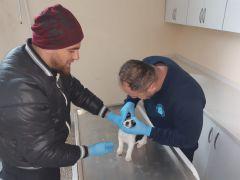 Yavru köpek donmaktan son anda kurtarıldı