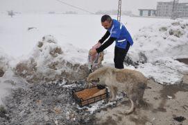 Yüksekova'da sokak hayvanları için yiyecek bırakıldı