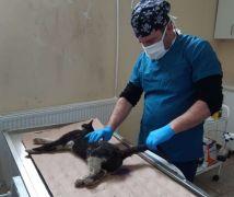 Aracın çarptığı kedi tedavi altına alındı