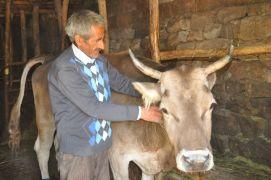 Bataklığa saplanan hayvanına kavuşan Atasoy'un mutluluğu