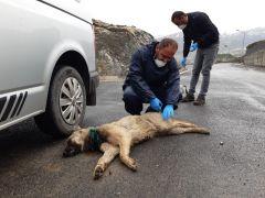 Boynuna inşaat teli dolanan köpek kurtarıldı