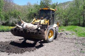 Şüpheli bir şekilde telef olan inek ilaçlanarak gömüldü