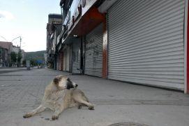 Yüksekova'da bayramın ikinci gününde de sokaklar sessiz