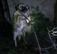 Yüksekova'da tellere takılan köpeği itfaiye ekipleri kurtardı