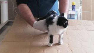 6 katlı binadan düşen yavru kedi hayata tutundu