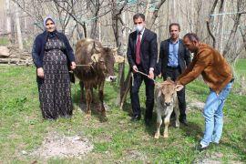 Bakan Pakdemirli'den, Diyarbakır annesine inek ve buzağı