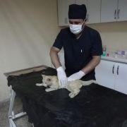 Hakkari'de darp edilen kedi kurtarıldı